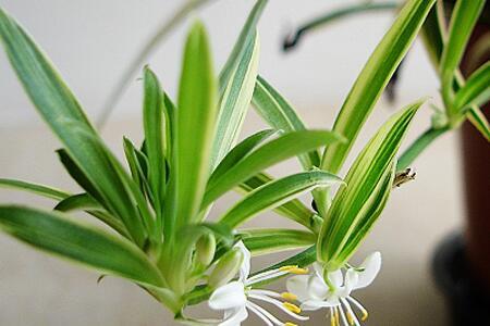 室内放什么植物净化空气?室内放植物注意事项?